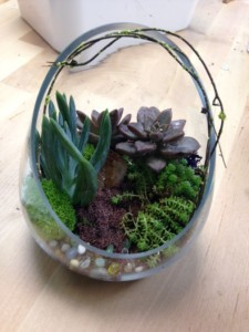 bruces-terrarium-front-view