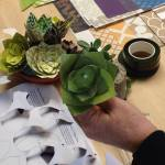 succulents on table